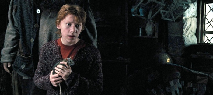 Ron really doesn't take care of Scabbers.